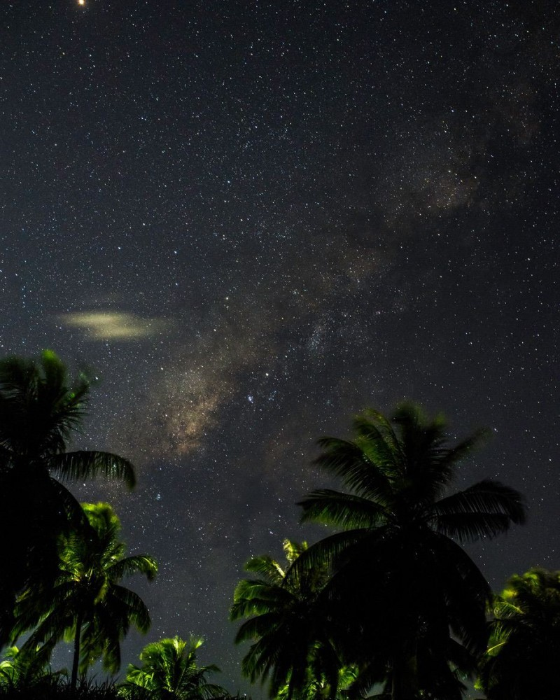 Palm trees and the night sky with stars and the milky way